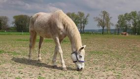 White horse on the pasture Royalty Free Stock Photos