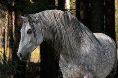 White horse portrait. In the forest Stock Image