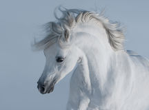 Horses - realistic photomontages  Royalty Free Stock Photo