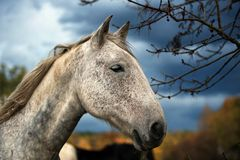 White horse portrait. stock photos