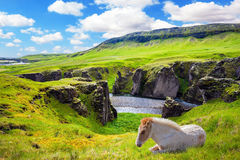 White horse rested on a cliff. The striking canyon in Iceland. The Icelandic Tundra in July. Bizarre shape of cliffs surround the stream with glacial water Stock Photography