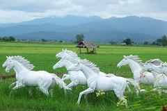 White Horse in rice fields Royalty Free Stock Images