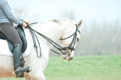 White horse and rider Royalty Free Stock Photo