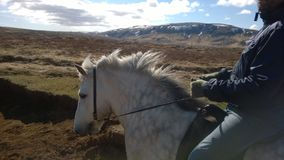 White horse with rider galloping. A horse with rider in Iceland, riding along the lava fields Royalty Free Stock Photography