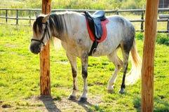 White riding horse Stock Photo