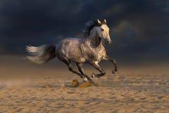 White horse run on dark background Stock Photo