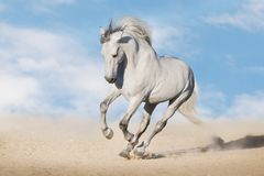 White horse run gallop. In desert dust against beautiful sky royalty free stock photos