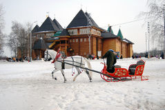 White horse runs on snow ground. Stock Photos