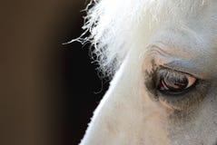 White horse's head very close-up Stock Photo