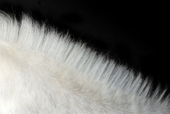 White horse's mane. A White horse's mane - Detail in diagonal with black background Royalty Free Stock Images