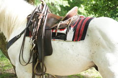 White horse with saddle Stock Image