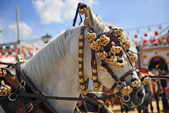 White horse in the Seville Fair, Andalusia, Spain Stock Images