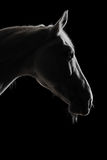 White horse silhouette in the darkness Royalty Free Stock Photo