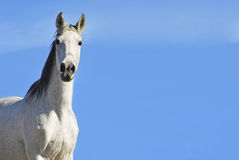 White horse on the sky Royalty Free Stock Images