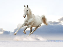 White horse in the sky Stock Photography