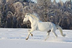 White horse in snow Stock Images