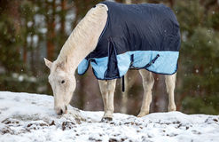 White horse in the snow Royalty Free Stock Photography