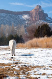 White horse in snowy pasture Stock Photos