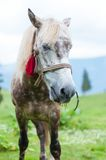White horse in spots, mountains on the background Royalty Free Stock Photos