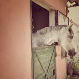 White horse in a stable. Background Stock Images