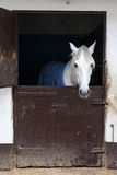 White horse in stable Stock Photo