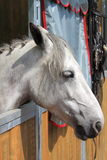 White horse in stable Royalty Free Stock Photos