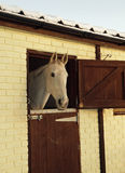 White Horse in Stables Stock Photos
