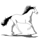 White Horse-Stallion Royalty Free Stock Photography