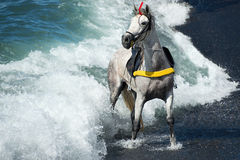 White horse standing on the beach in front of a big wave Royalty Free Stock Photo