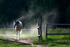 White horse standing behind opened gate in dust Royalty Free Stock Photography