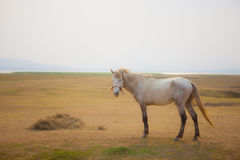 White horse standing on farm field with beautiful sun light royalty free stock photography