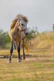 White horse standing on farm field with beautiful sun light Royalty Free Stock Images