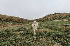 White Horse Standing on Green Grass Field stock photos