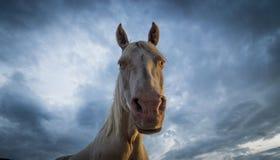White Horse on Stormy Background Stock Image