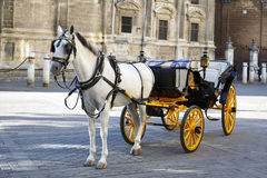 White horse and traditional tourist carriage in Sevilla stock photos