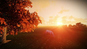 White horse and tree of life at sunrise, tilt. Hd video stock video