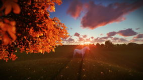 White horse and tree of life at sunset, tilt. Hd video stock video footage