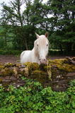 White Horse in Wales Royalty Free Stock Photo