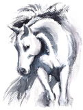 White Horse Watercolor Animal Illustration Hand Painted
