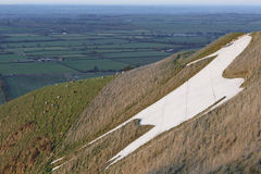 White horse. Westbury White Horse Wiltshire UK with sheep and Wiltshire countryside in the distance stock photography