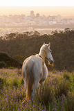 White horse with wild flowers and city background Royalty Free Stock Images