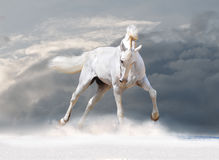 White horse in winter Royalty Free Stock Photography