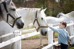 Free White Horse With Boy Stock Image - 71359291