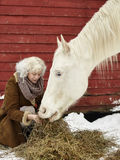 White horse and woman Royalty Free Stock Images