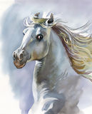 White horse. Wonderland, nature watercolor Royalty Free Stock Images