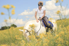 White horse on yellow flower. A white horse on yellow flower field with a rider Stock Photos