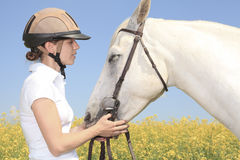 White horse on yellow flower field with a rider Royalty Free Stock Photo