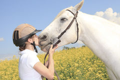 A white horse on yellow flower field with a rider Royalty Free Stock Image