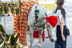 White horse with with yellow and red pattern fabric, flower necklace and red turban for Indian wedding ceremony in Bangkok. Royalty Free Stock Images