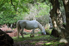 White horse2. Beautifull white horse grazing in the forest Royalty Free Stock Photos